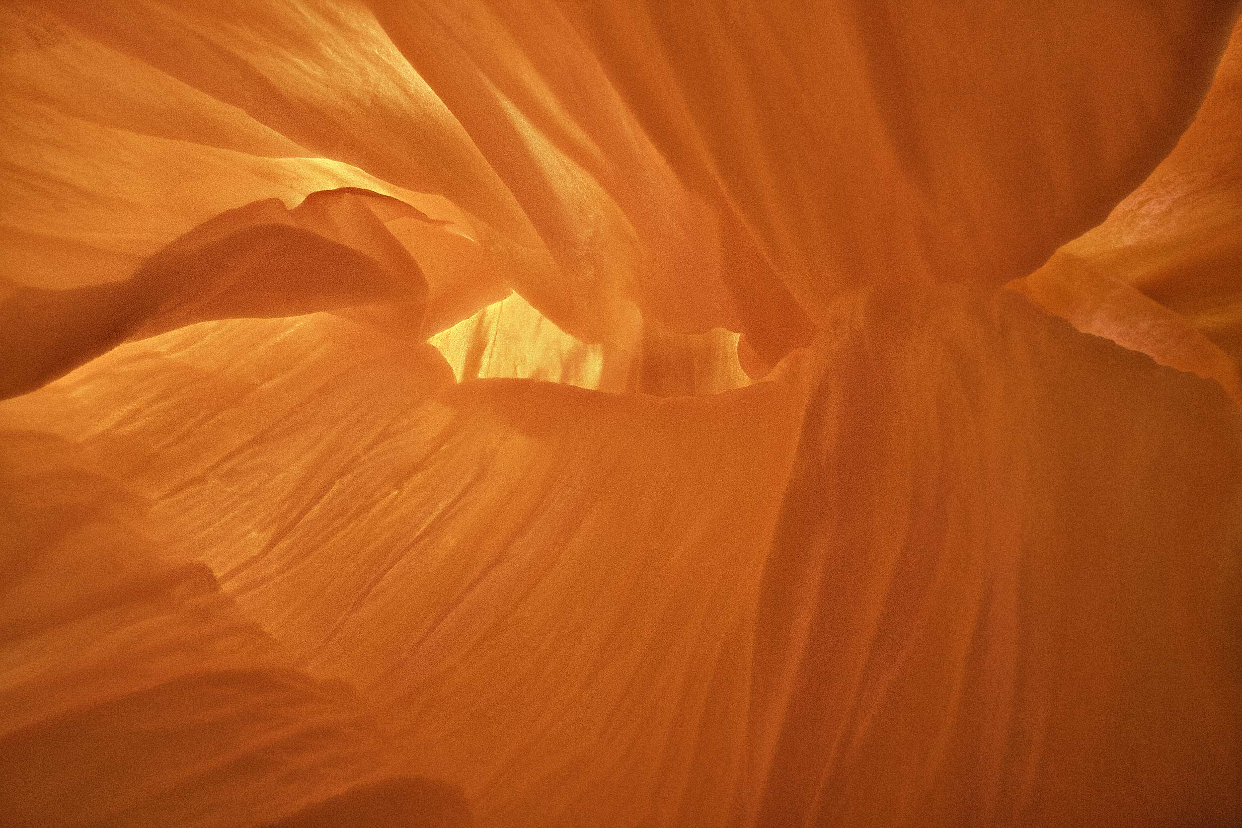 Nick_Rees-ORANGE_Poppy